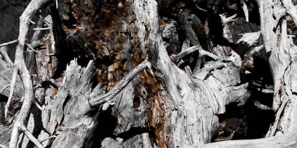 Bois mort dans le massif des Monges