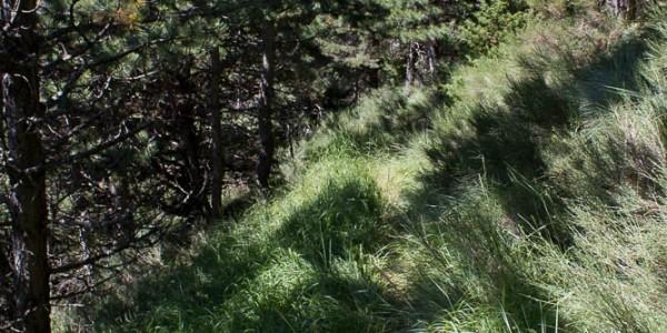 Descente dans la forêt du Garnaysse